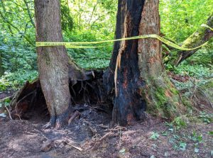 Canada Day Fire on Ancient Grove Creek