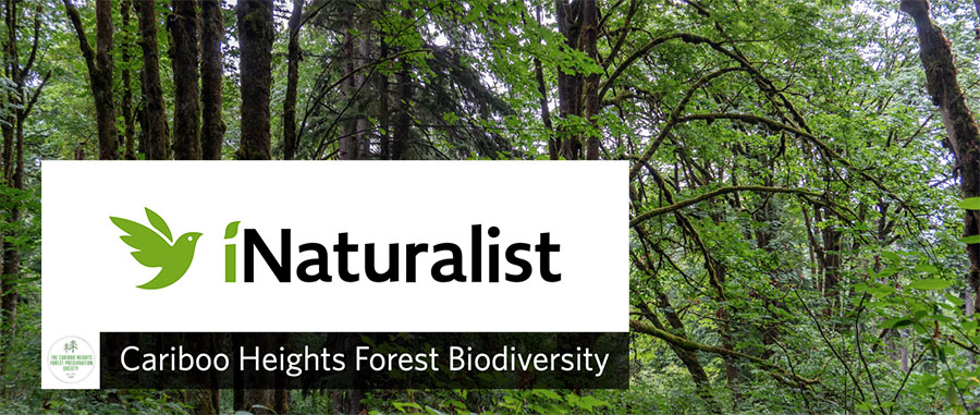 Cariboo Heights Forest Biodiversity Project