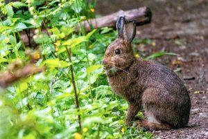 Endangered Species Spotted!
