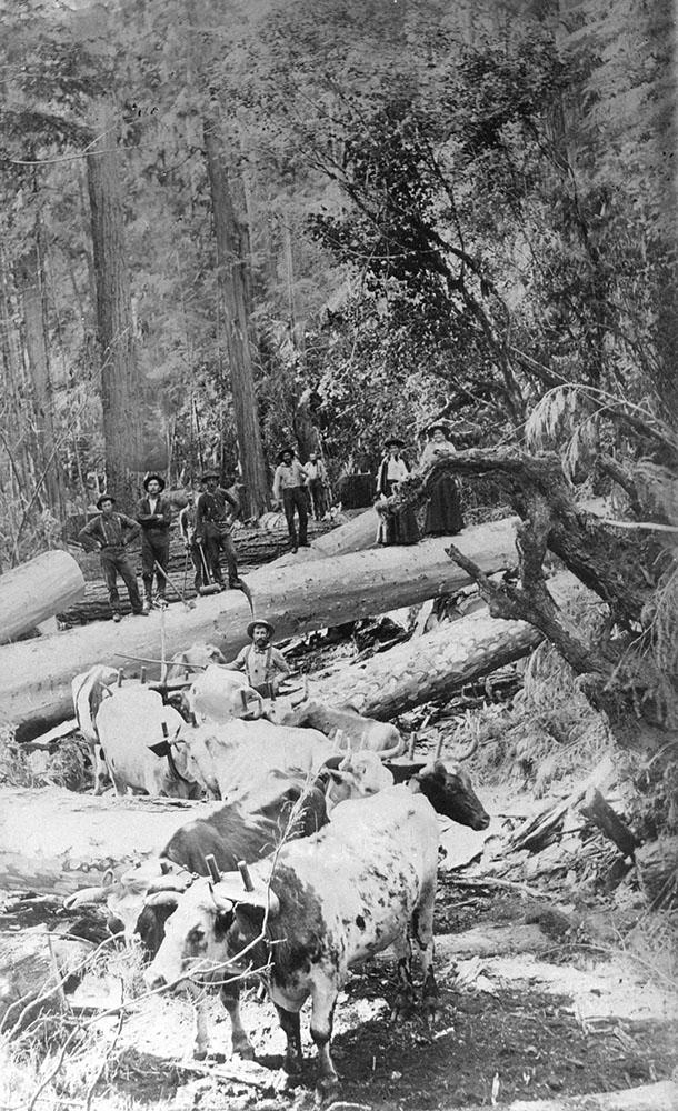 Logging camp 1896